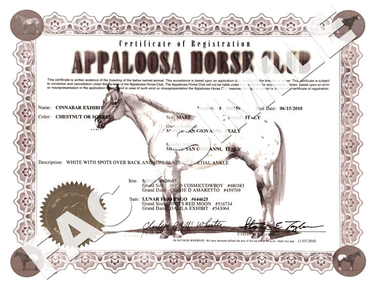 certificato cinnabar exhibit