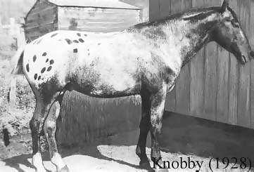 Knobby2