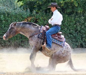 BOEMIL TWIN ROBOTOP stallone appaloosa reining stop