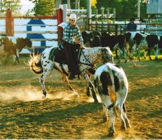 sunset-ranch-appaloosas-breeding Brett and Rocky 001