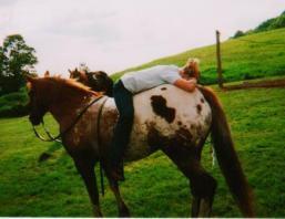 sunset-ranch-appaloosas-breeding shinook 001