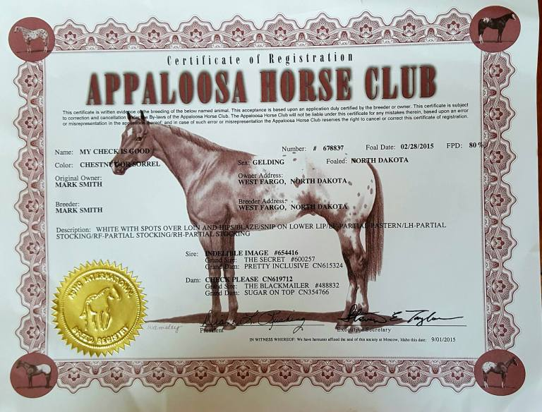 My Check is Good appaloosa gelding certificate.jpg
