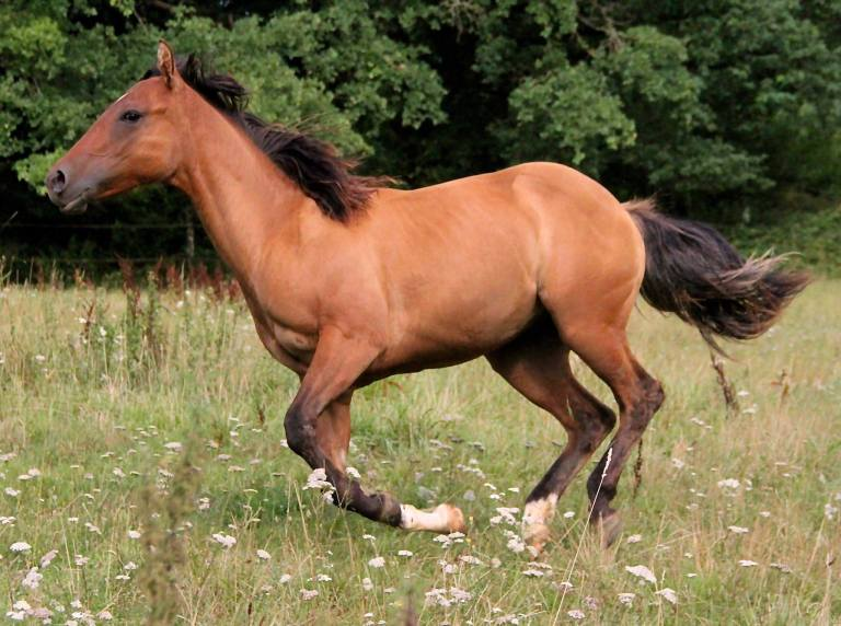 CB TOPS ROMAN JACS Appaloosa Yearling colt, Reining Prospect, very good origins.