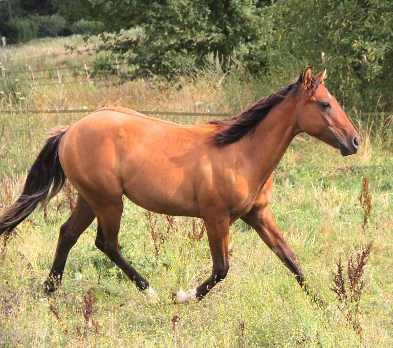 CB TOPS ROMAN JACS Appaloosa Yearling colt, Reining Prospect, very good origins