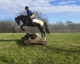 wapuzzan black sport appaloosa stallion.