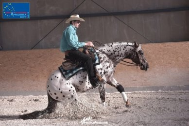 TOPSAIL-VIPER-Appaloosa-Stallion-Reining-Champion-Right-Stop