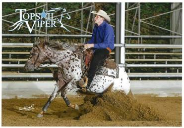 TOPSAIL-VIPER-Appaloosa-Stallion-Reining-Champion-Stop