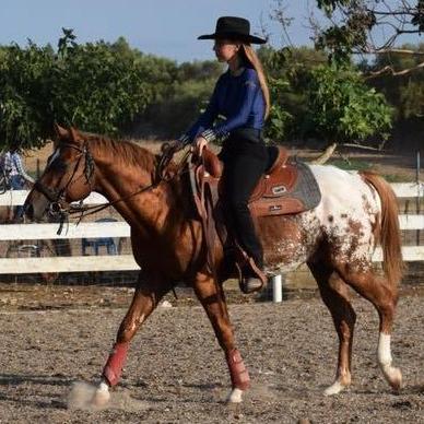 atechnicolordream-ra-appaloosa-colt-cover-saddled-e1537598456592